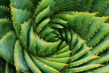 The Health Benefits of Aloe Vera
